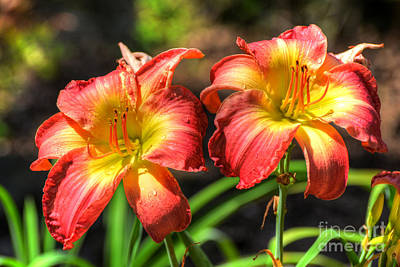 Photograph - Twin Lilies by Kathy Baccari