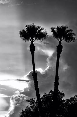 Photograph - Twin Palms by Anthony Citro