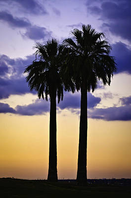 Photograph - Twin Palms by Sherri Meyer