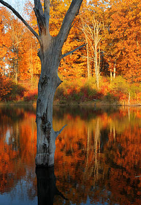 Photograph - Twin Point Pond Reflections by Coby Cooper