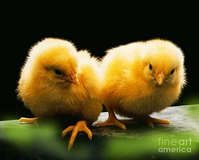 Photograph - Twin by Ragunath Venkatraman