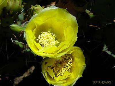 Photograph - Twin Texas Cacti Blooms by Robert Rhoads