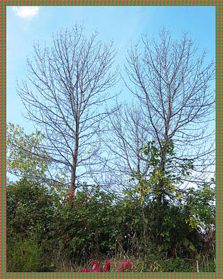Twin Tree Buddies Standing Tall Reaching Sky      Humans Get Scared But Fall Seasons Is Time For Ren Art Print