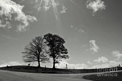 Photograph - Twin Tree Meadow by Deborah Smith
