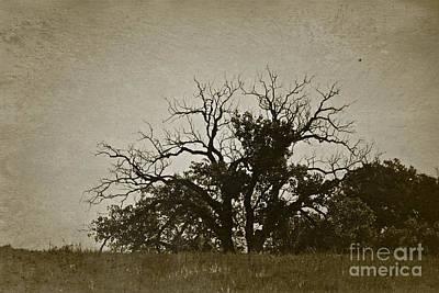 Kiss Breast Nipple Photograph - Twin Trees - No.8030v by Joe Finney