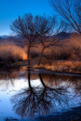 Art Print featuring the photograph Twin Trees by Kristal Kraft