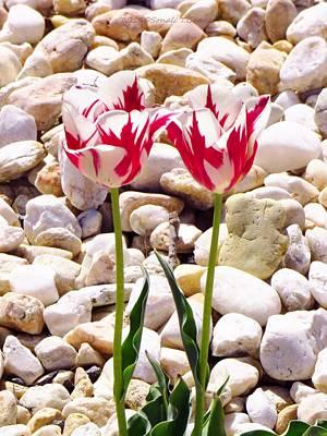 Twin Tulip Beauty Art Print by Sonali Gangane