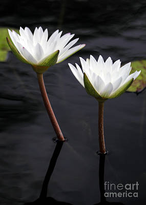 Florida Flowers Photograph - Twin White Water Lilies by Sabrina L Ryan