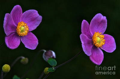 Photograph - Twins In Jade Gold And Purple Velvet by Byron Varvarigos