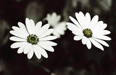 Art Print featuring the photograph Twins  by Lana Enderle
