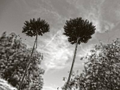 Photograph - Twins by Mark David Gerson