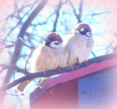 There Were A Couple Of Fluffy Twins Sitting On The Roof  Original