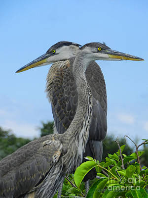 Photograph - Twins Ready To Fledge by Grace Dillon