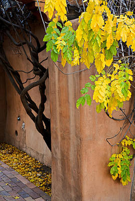 Photograph - Twisted Autumn Leaves Cv by Robert Meyers-Lussier