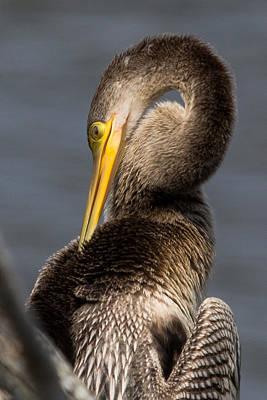 Photograph - Twisted Bird by Alan Raasch