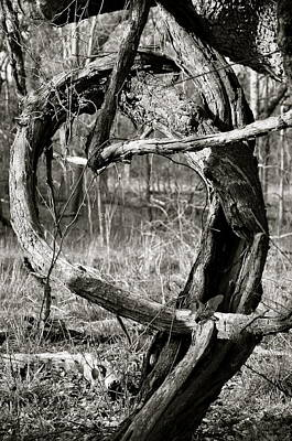 Photograph - Twisted  by Cherie Haines