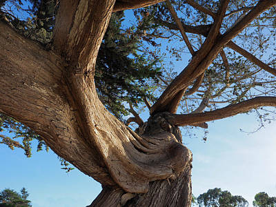 Photograph - Twisted Cypress by Derek Dean