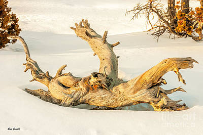 Photograph - Twisted Dead Tree by Sue Smith