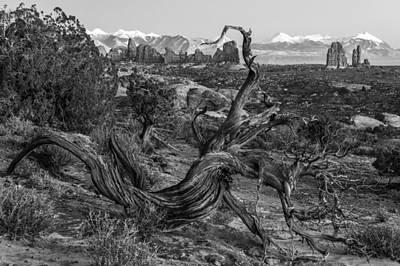 Photograph - Twisted Desert Monochrome by Dustin  LeFevre