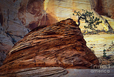Zion National Park Photograph - Twisted Juniper by Inge Johnsson