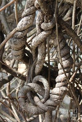 Photograph - Twisted Knots In Sepia by Diana Black