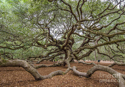 Photograph - Twisted Limbs by Dale Powell
