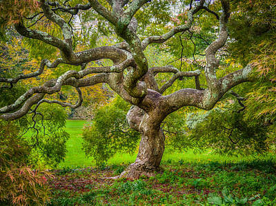 Print featuring the photograph Twisted Maple by Steve Zimic