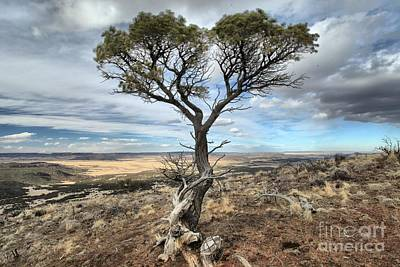 Photograph - Twisted On The Edge by Adam Jewell