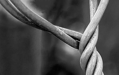 Photograph - Twisted by Ron Roberts