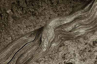 Photograph - Twisted Root by Michael Kirk