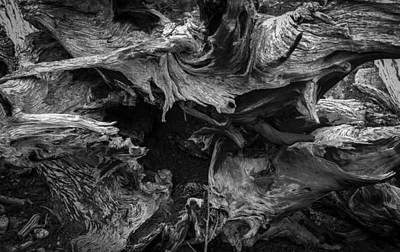 Photograph - Twisted Roots by Angelique Rea