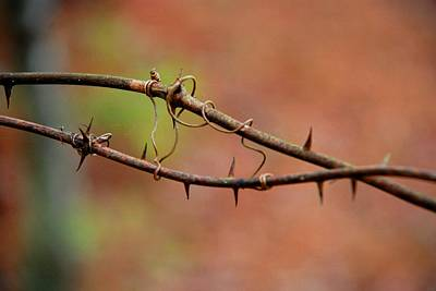 Photograph - Twisted Thorns by Charlie and Norma Brock