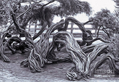 Twisted Tree - 01 Art Print by Gregory Dyer