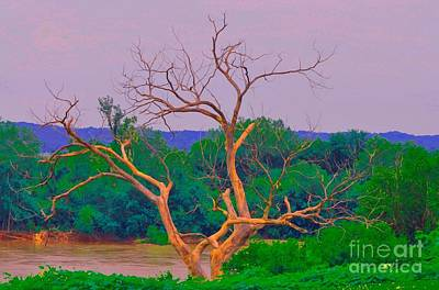 Photograph - Twisted Tree At Rivers Side by Liane Wright