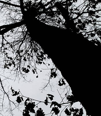 Print featuring the photograph Twisted Tree by Candice Trimble