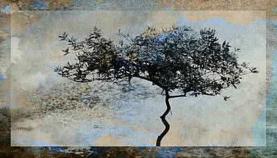 Twisted Tree Art Print by David Ridley