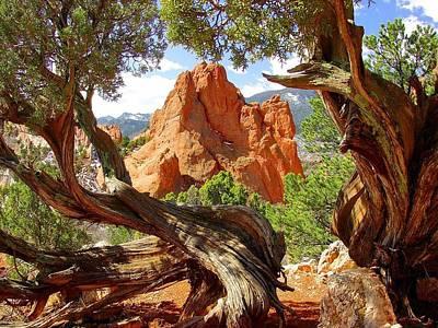 Photograph - Twisted Tree Frame by Jane Girardot