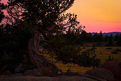Photograph - Twisted Tree In Sunset by Angelique Rea