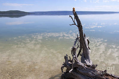 Photograph - Twisted Tree In Yellowstone Lake by Brenda Kean
