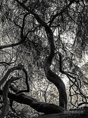 Photograph - Twisted Tree by Kate Brown