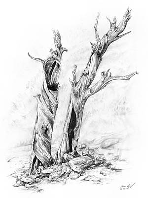 Pine Trees Drawing - Twisted Trees by Aaron Spong