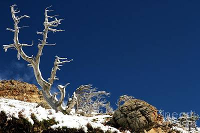 Photograph - Twisted Trees by Adam Jewell