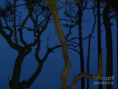 Twisted Trees At Twilight Art Print by Anna Lisa Yoder
