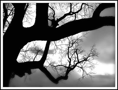 Twisty Tree Silhouette Art Print