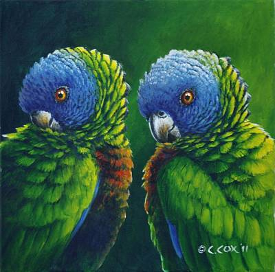 Two - St Lucia Parrots Art Print by Christopher Cox