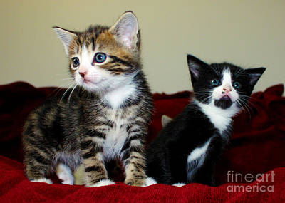 Photograph - Two Adorable Kittens by Terri Waters