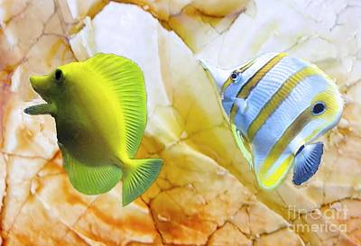 Photograph - Two Angelfish by Janette Boyd