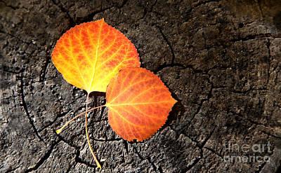 Two Aspen Leaves Art Print