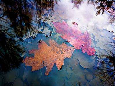 Photograph - Two Autumn Leaves by Milan Surkala