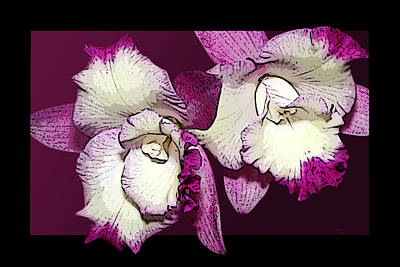 Two Baby Orchids Art Print by Phyllis Denton